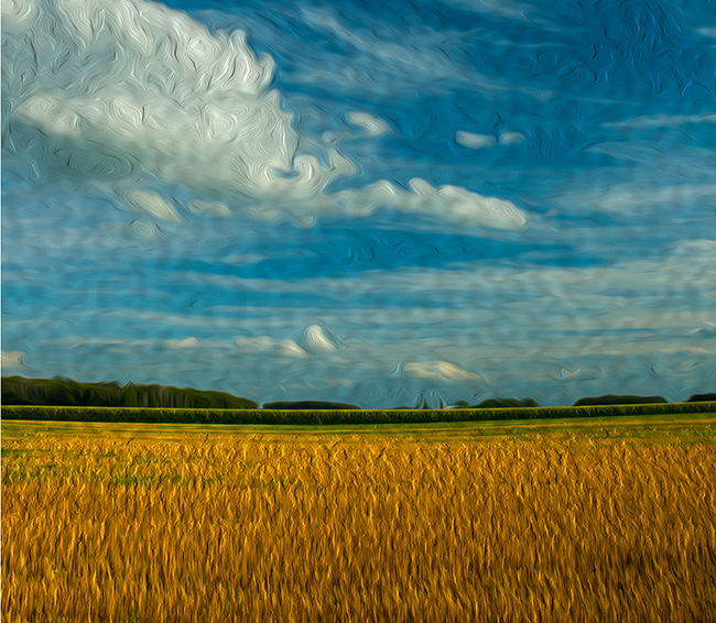 Wheat Field Fulton County
